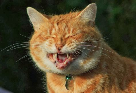 20 Hilarious Cats Laughing At You  Best Photography, Art