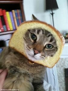 Taco Cat Wallpaper - WallpaperSafari