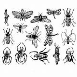 Insects Botanical Warm Start Glass Decal Insect Tattoo Bee Emergencysurvival Prices Decals Bullseye 3mm Amber 10cm 3cm Bugs Starting Harryandrewmiller sketch template