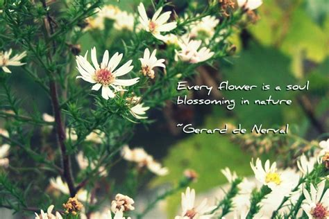 Pretty Flower Quotes Quotesgram. Good Quotes Goodreads. Values To Live By Quotes. Christian Quotes Cover Photos. Life Quotes Gandhi. Kannada Work Quotes. Friendship Quotes Humor. Success Quotes Basketball. Life Quotes Quotes To Live By