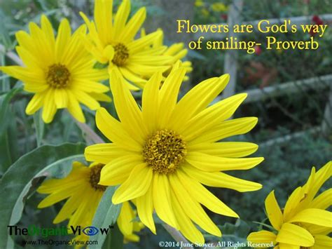 Of The Gods Flowers by Flower And God Quotes Quotesgram