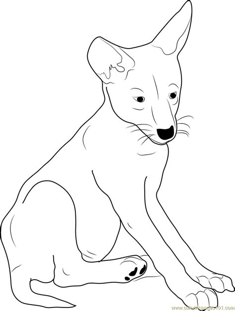 coyote pup coloring page  coyote coloring pages
