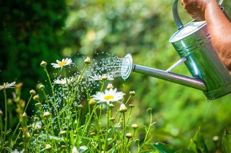 la importancia del riego  su jardin blog jardineria