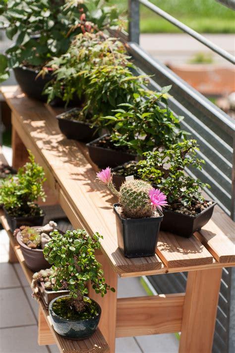 Japanischer Garten Auf Dem Balkon by Sommer Auf Dem Balkon Bonsai B 228 Ume Bonsai Tree Types