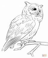 Owl Coloring Pages Drawing Faced Southern Realistic Draw Printable Step Beginners sketch template