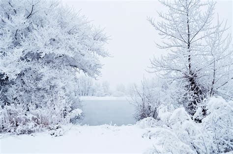Free Winter Picture this winter free stock photo domain pictures