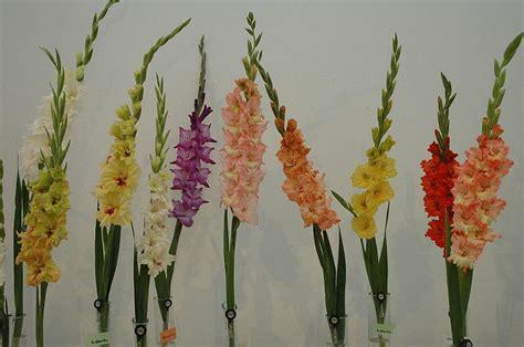 20 Puķes, kuras aug Latvijā - Spoki