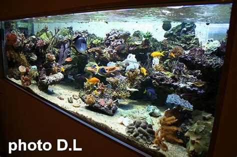 quel d 233 cor pour mon aquarium aquaroche