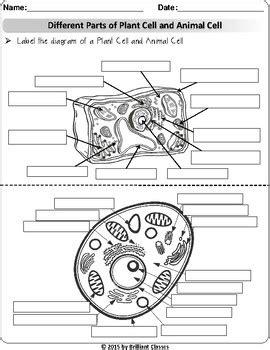 animalplant cell labeling venn diagram cell parts