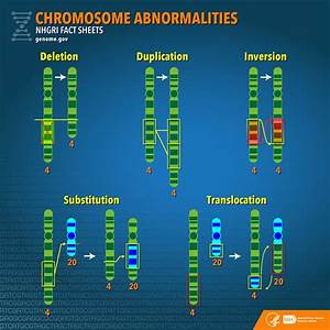 Chromosome Abnormalities Fact Sheet
