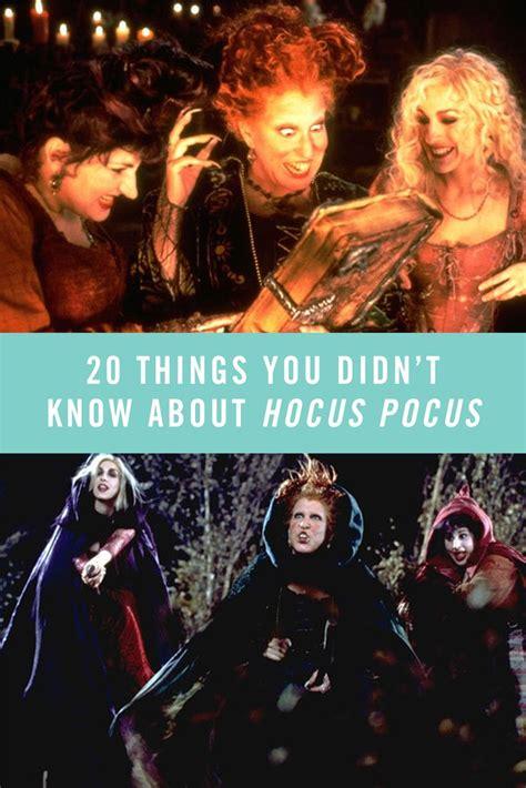 Best Hocus Pocus Images Pinterest Halloween Prop