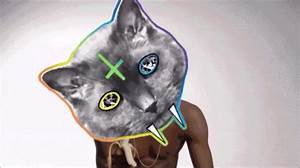 Cat Party GIF - Find & Share on GIPHY