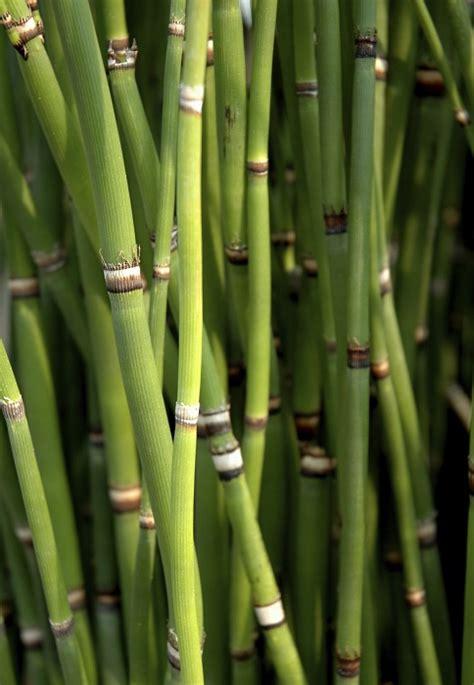planter un bambou en pot le magazine gamm vert
