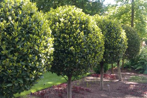 trees for garden mediterranean garden plants