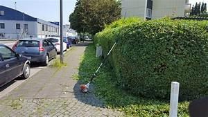 Heckenschnitt Bis Wann : heckenschnitt aachen rollrasen plus verlegung ~ A.2002-acura-tl-radio.info Haus und Dekorationen