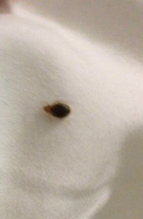 Bed Bugs Nyc by Bed Bugs Picture Of Element New York Times Square
