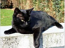 Katzen Bilder Lustig Tier Der Beliebtesten Und Entwickelt