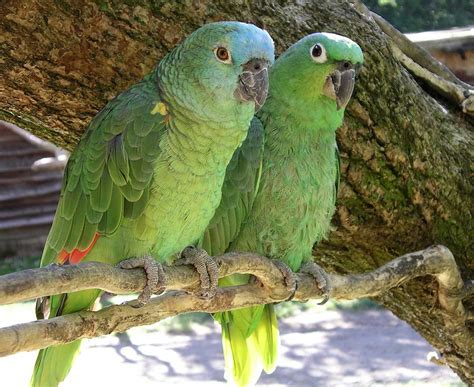 top 10 best pet birds list of beautiful birds