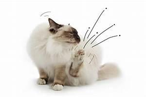 Flöhe In Der Wohnung Was Tun : 23 besten katzen tipps bilder auf pinterest k tzchen hund katze und hunde ~ Buech-reservation.com Haus und Dekorationen
