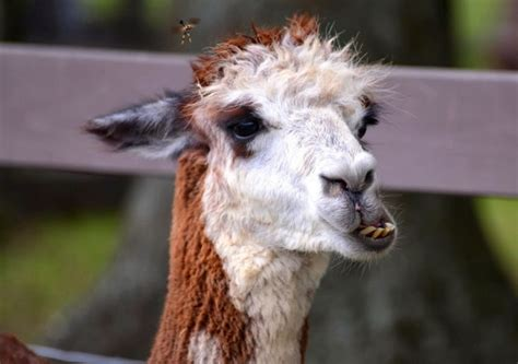 hilarious high resolution images  animals making funny faces