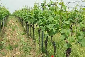 Wann Wein Pflanzen : wann wein schmeckt der biodynamische kalender weinhalle ~ Orissabook.com Haus und Dekorationen