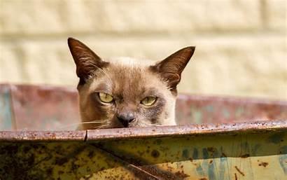 Funny Cats Wallpapers Cat 1080p Desktop