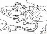 Opossum sketch template