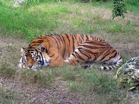 If Elite Was An Animal