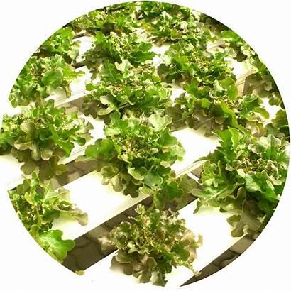 Hydroponic Farming Plan Kidsgardening Systems