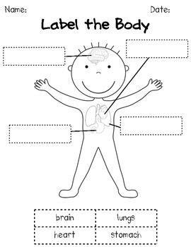 the 25 best human crafts ideas on human 818 | 7d6170a4971b9c548b21919d0af889e2 human body crafts human body preschool