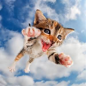 pictures of cats kittens photographed mid pounce boing boing