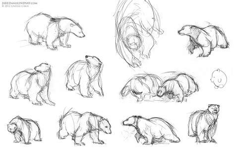 draw  polar bear    polar bears