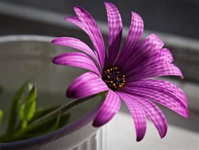 Flowers Wallpapers Desk Flower Desktop Background Purple