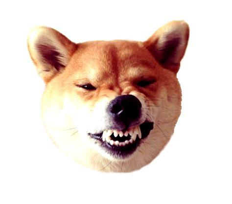dogecoin transparent png archive dogecoin