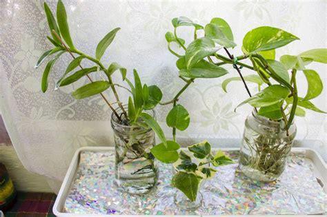 Grow Ls For Indoor Plants by Growing Your Indoor Plants In Water Gardening Forums