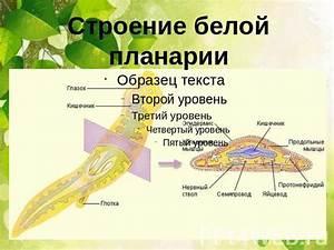 Мазь на уксусе и яйце от псориаза