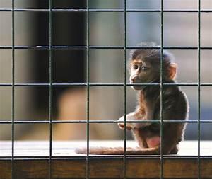 Cute yet slightly heartbreaking Baboon baby shot   Taken ...
