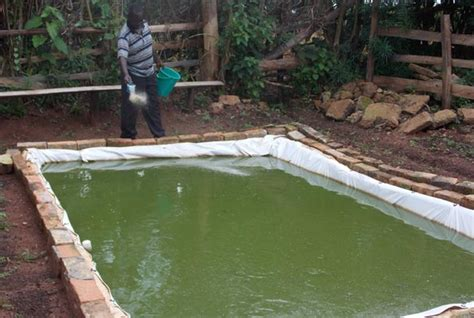Fish Farming In Your Backyard With Harvested Rainwater
