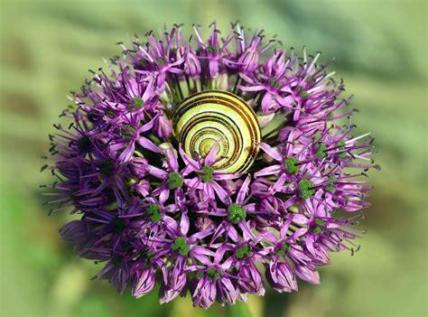 picture flower plant petal snail animal