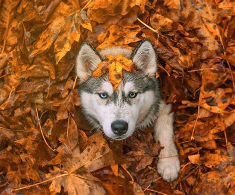 FOTO: 20 mājas un savvaļas dzīvnieki rudenī. Mīlīgi! | Praktiski.lv