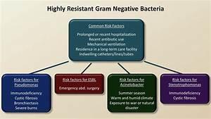 Antibiotics For Gram Negative Infections  Antibiotics