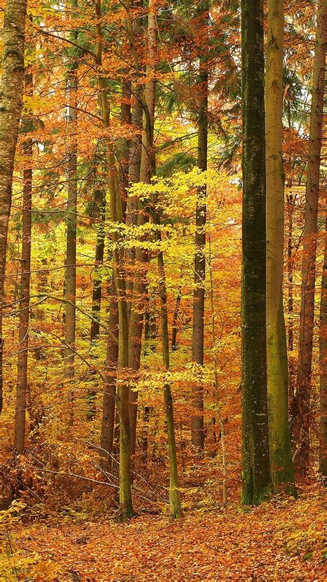 Backgrounds Fall Gold Wallpaper Iphone by Gold Nature Fall Wallpaper For Iphone 6 From Everpix App