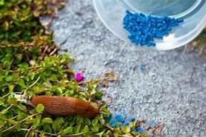 Salzlösung Gegen Unkraut : die besten 25 nacktschnecken ideen auf pinterest nacktschnecke schneckenbek mpfung und ~ Orissabook.com Haus und Dekorationen