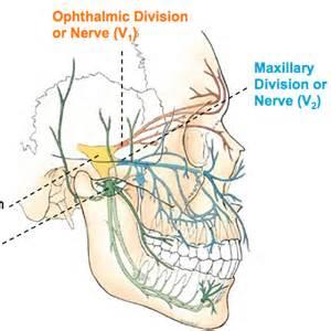 V2 Trigeminal Nerve Branches