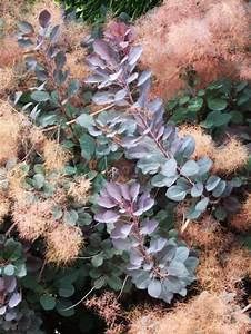 Schnell Wachsende Büsche : farbenfrohe b sche f r ihren garten 27 charmante pflanzen f r sie ~ Whattoseeinmadrid.com Haus und Dekorationen