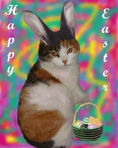Easter Kitty Animation Happy Animated Spring Holidays