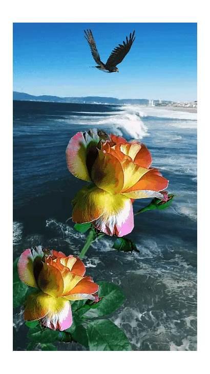 Gifs Nature Amor Flores Buenos Dias Morning