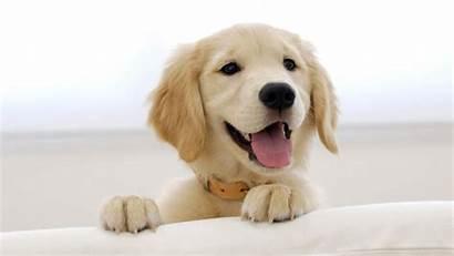 Pet Dog Dogs Cut Help Child Having