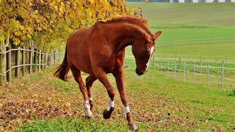 horses 4k horse hd desktop wallpapers re quality