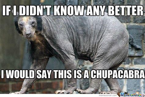 Shaved Meme - shaved bear by recyclebin meme center